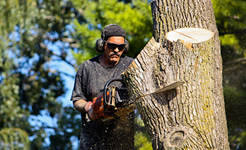 tree takedown and removal