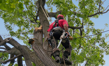 tree care near Jacksonville Beach